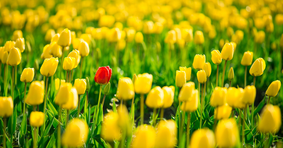 It's Okay To Be Different: Positioning Your Agency to Stand Out from Competitors